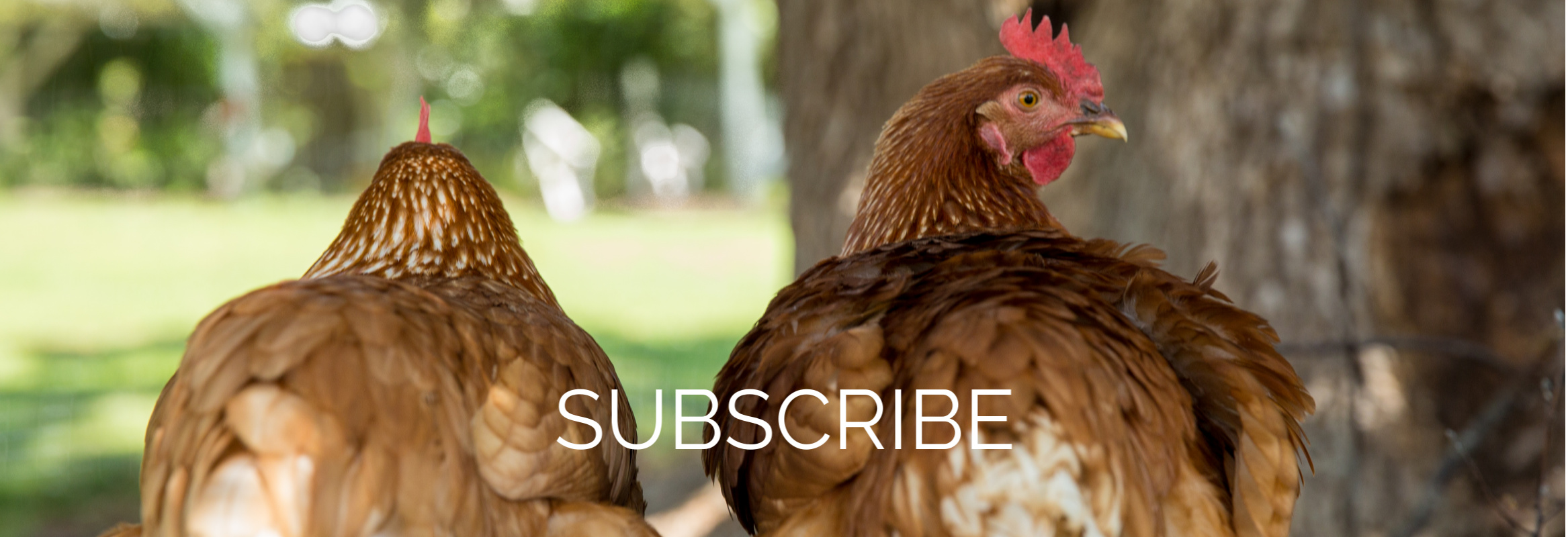 Hens SUBSCRIBE (1)